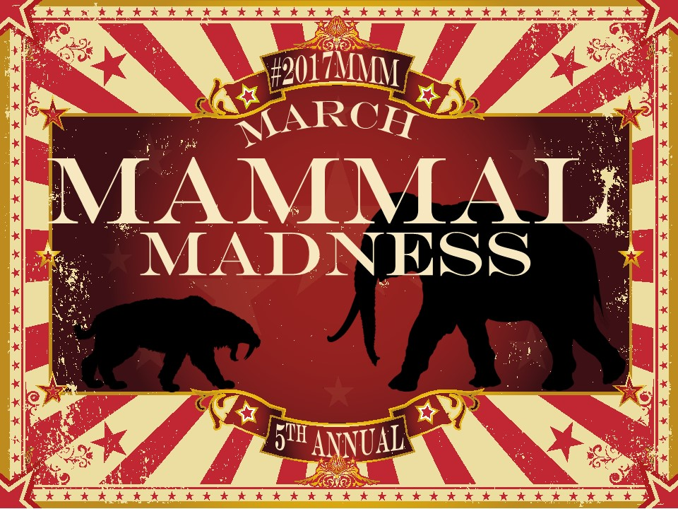 March mammal madness 2017 mammals suck milk and for this 5th annual march mammal madness weve dialed it up to 11 reheart Choice Image