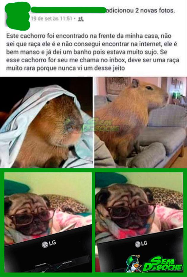 CACHORRO DE RAÇA MUITO RARA