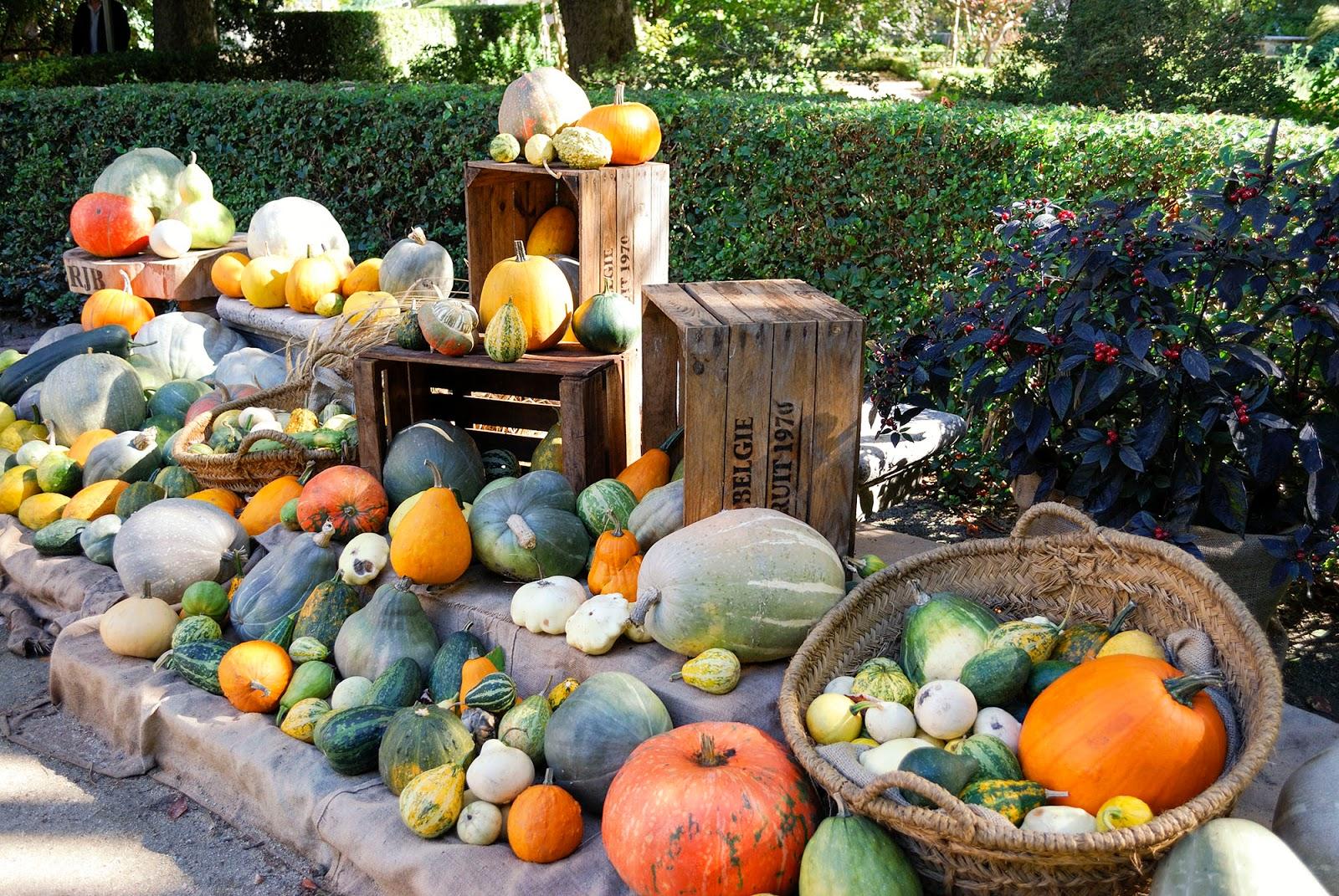 Royal Botanic Gardens fall autumn pumpkin display exhibit Madrid