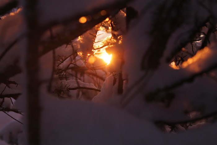 winter light // finland // photography // canon