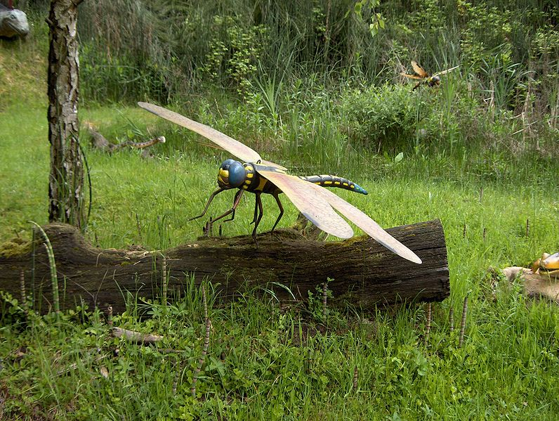 Giant insects fossils