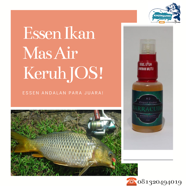 Oplosan Essen Ikan Mas Air Keruh 2019 Paling Joss Pusat Essen Terbaik