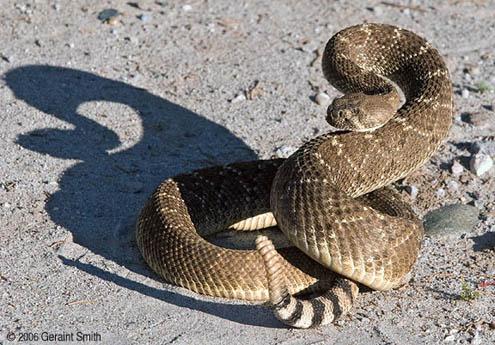 http://4.bp.blogspot.com/-ORh5GSqSjDA/T0pNQ6iVKiI/AAAAAAAAAoM/m_MmGuDXads/s1600/ular_derik.jpg