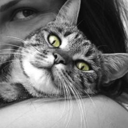 Prueba Snack Para gatos