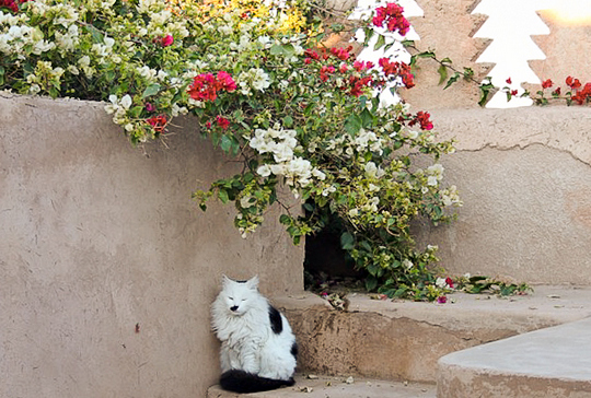 marrakesh morocco cat