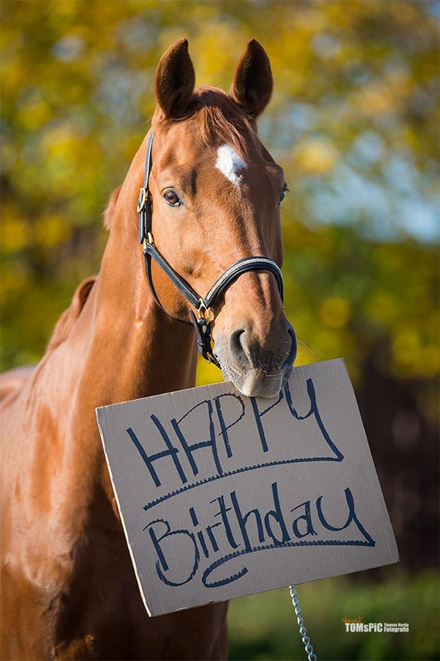 Tacchi A Cavallo Happy 2 176 Blogiversary Thank You
