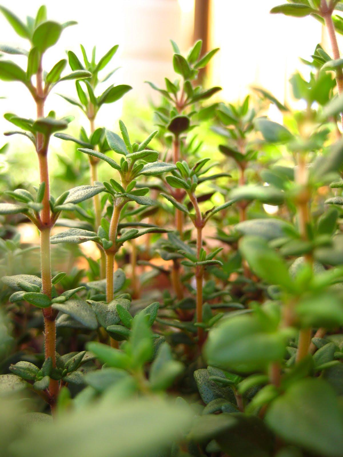 {The Smith Nest}: Patio Herb Garden