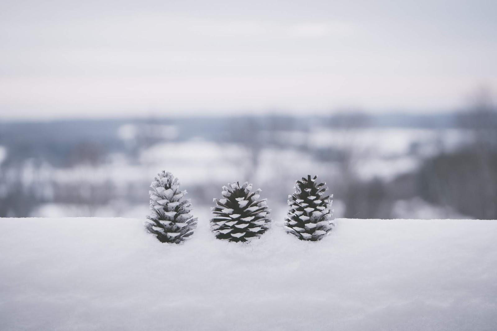 trois pommes de pin sur un tronc enneigé devant un fond flou laissant deviner un paysage enneigé