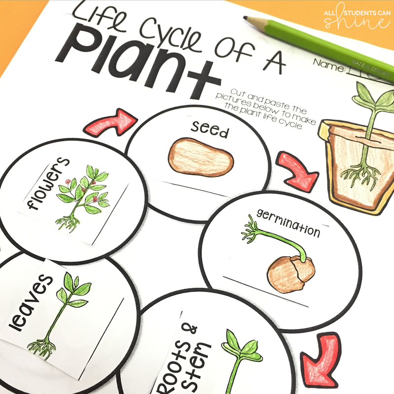 Plant Ideas & Activities - All Students Can Shine - photo#18