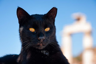 black cat in front of remains of a Greek temple
