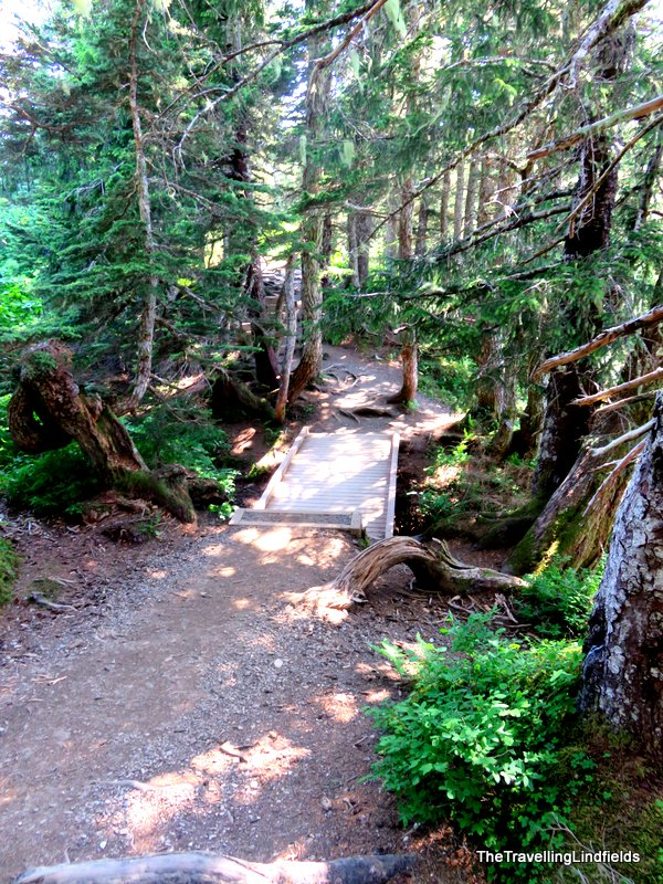 Walking path, Mt Roberts Juneau, Alaska