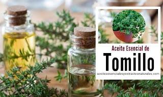 El aceite esencial de tomillo con propiedades anti-microbiano, antioxidante, antirreumático,