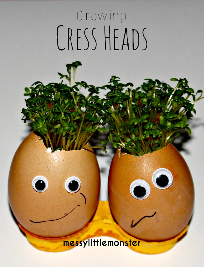 Preschooler growing activity/ simple science. How to grow cress using an egg shell and cotton wool.  Kids will love designing their own characters.