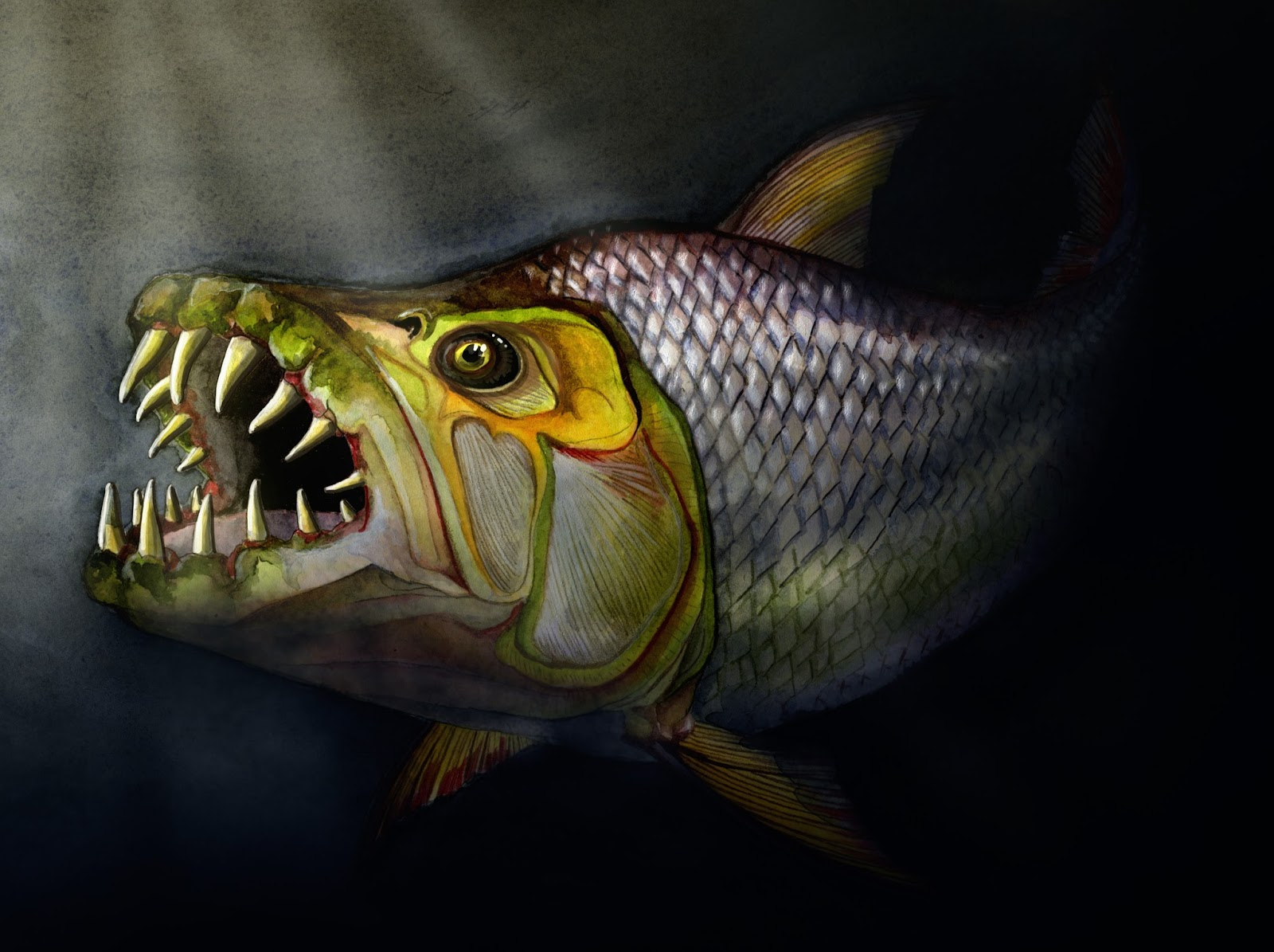 Dope nopes for Tiger fish pictures