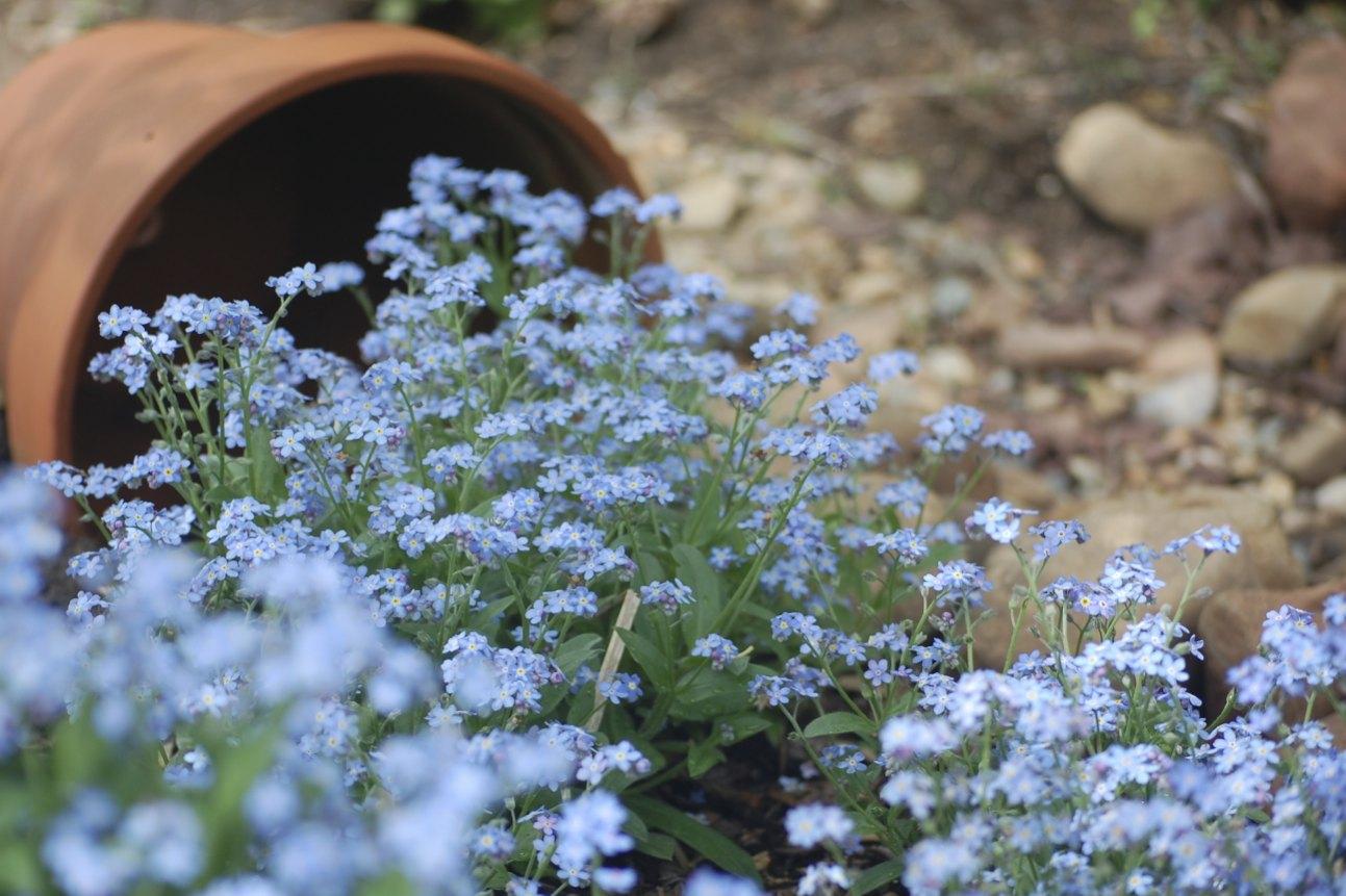 Molto Come creare una cascata di fiori con un vaso rovesciato | Guida  SL72