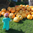 Trendy Tot Tuesday: Pumpkin Patch