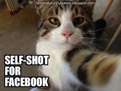 Cat takes selfie for Facebook
