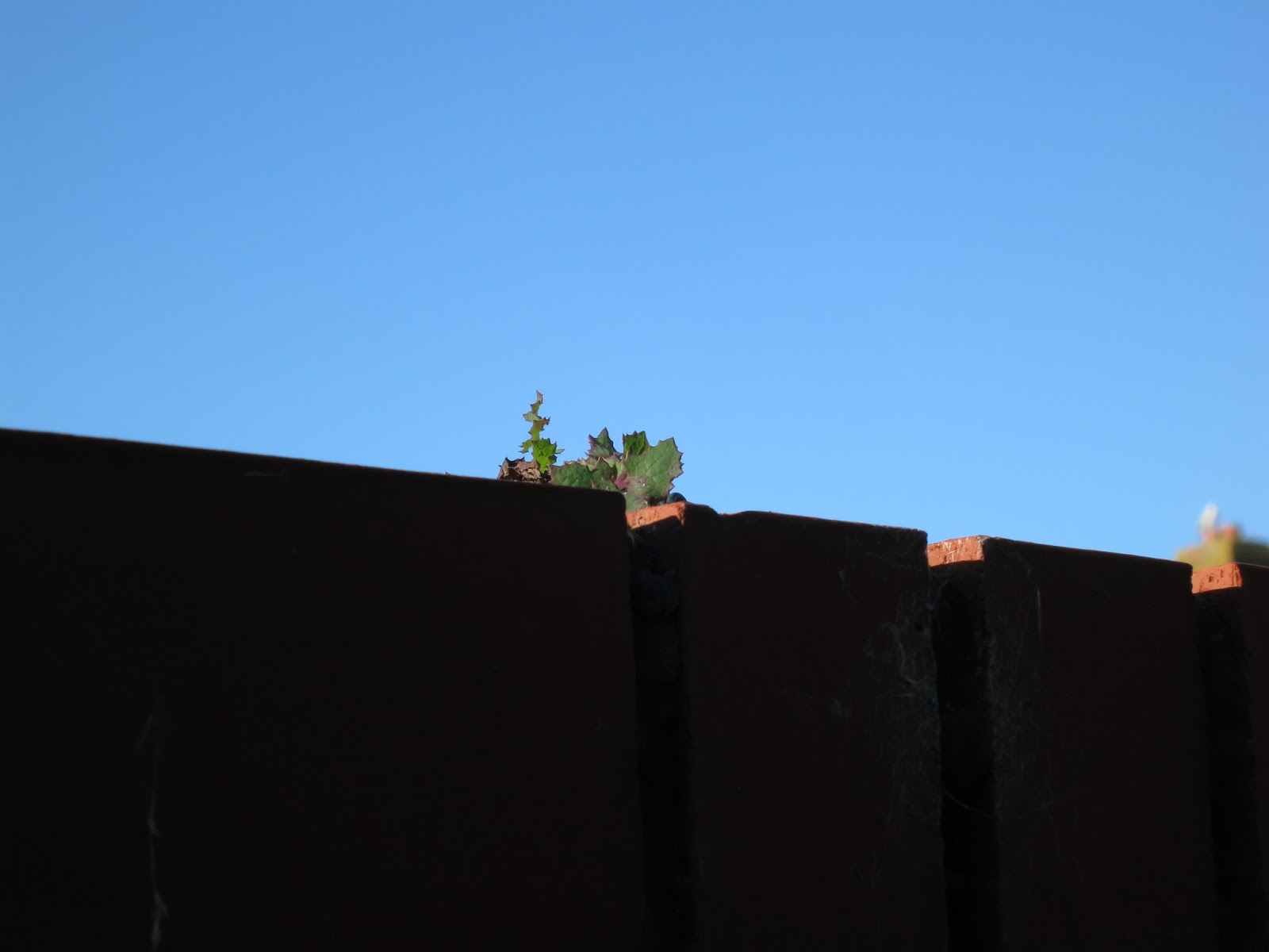 Green leaved plant on top of red brick wall.
