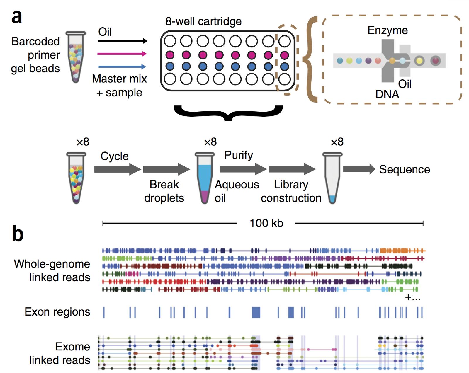 CoreGenomics: 10X Genomics publications