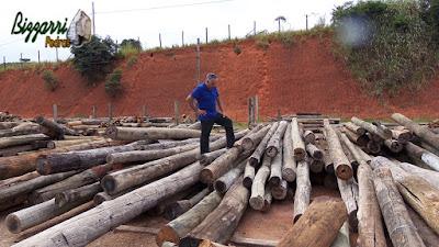 Bizzarri visitando um depósito de madeira de demolição. Na foto, escolhendo postes de madeira de demolição para fazer as construções rústicas. Ideais para fazer pontes de madeira, pilaras de madeira e casas com esqueleto de madeira. 24 de março de 2017.