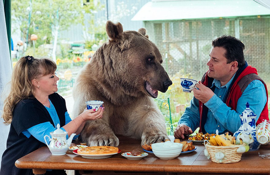 Russian Couple Adopted An Orphaned Bear 23 Years Ago, And They Still Live Together - This couple adopted Stepan when he was a 3-month-old orphaned cub