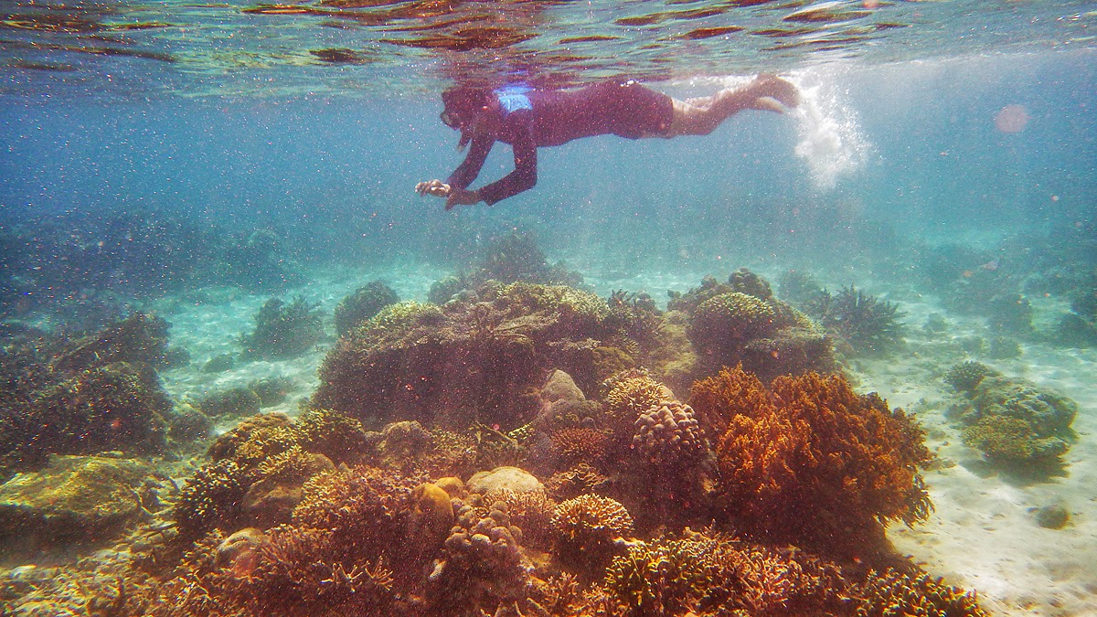 Underwater in the Tenau Beach, Kupang