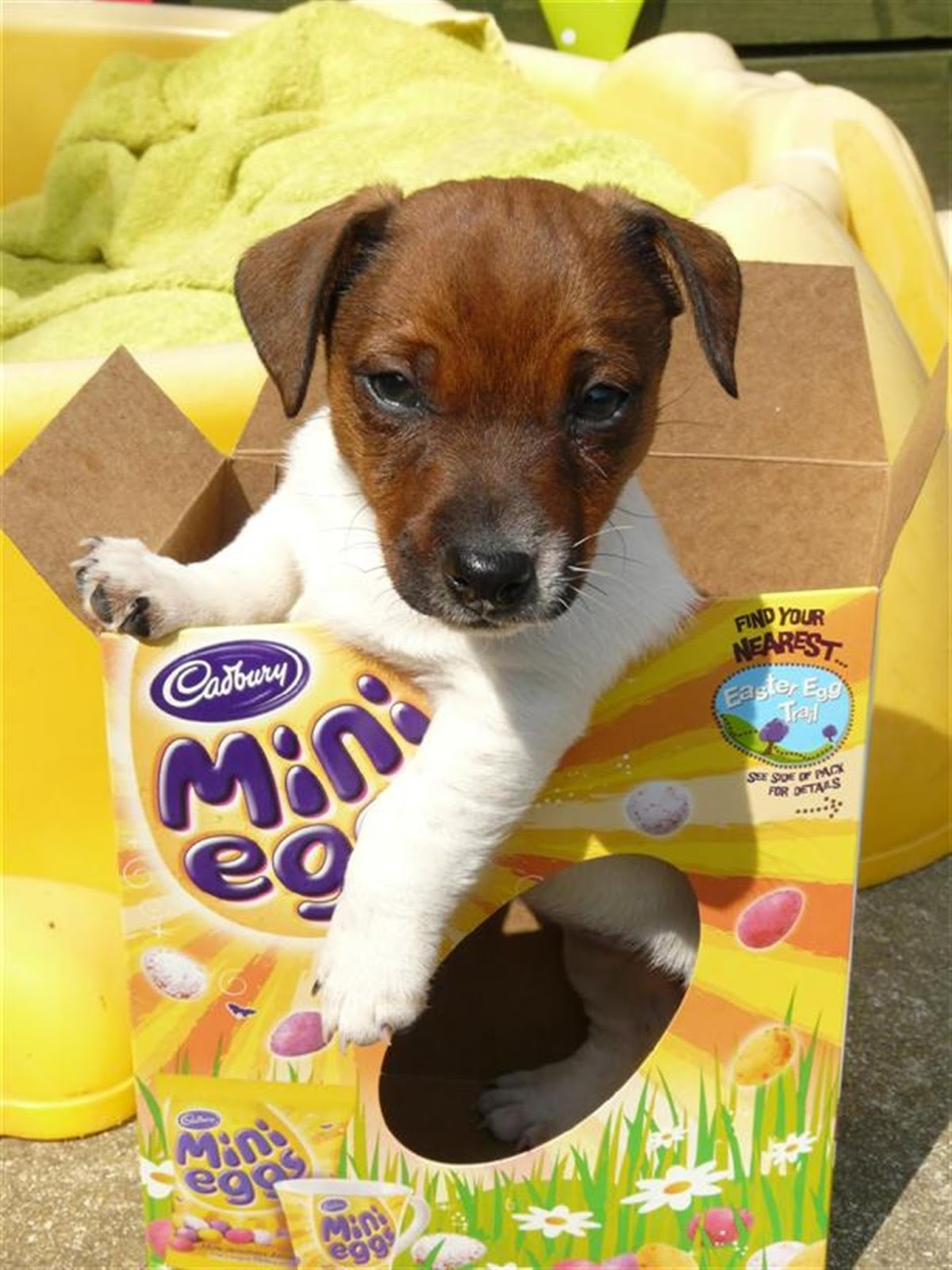 No Lost Dogs: Easter Eggs Can Kill Your Dogs: Keep Chocolate Away!