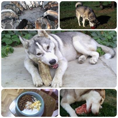 Best Food For Huskies Uk