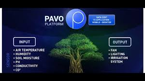 Pavocoin-ICO-Review, Blockchain, Cryptocurrency