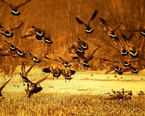 Wetland life