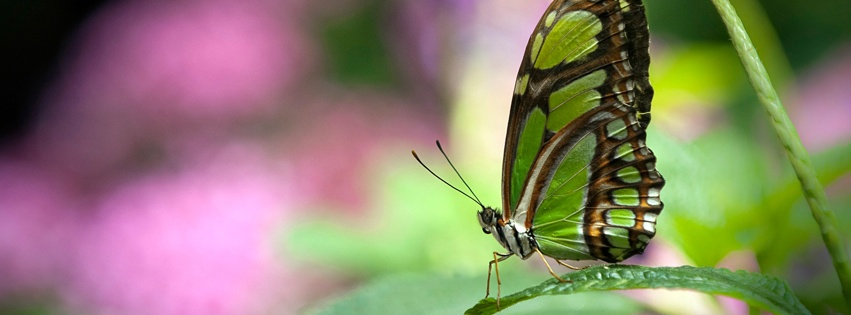 Butterfly Facebook Covers | WELCOME TO PICTURE WORLD!