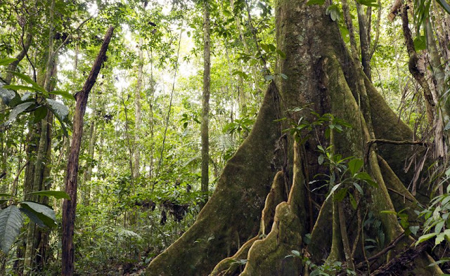 Amazon forests: Biodiversity can help mitigate climate risks
