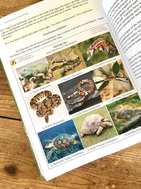 fungi study guide essay