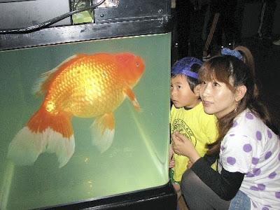 Contoh Descriptive Text Tentang Hewan ikan (fish)