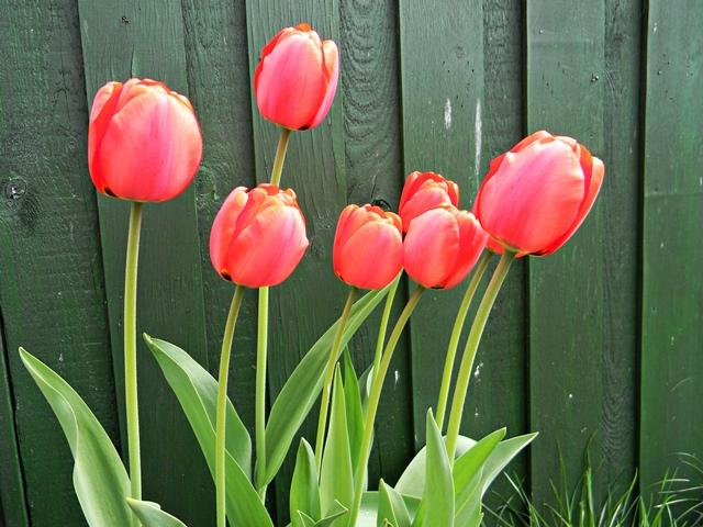 kwiaty, koło domu, rośliny, ogród