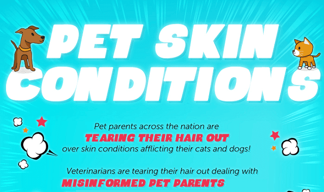 The Top Causes of Pet Skin Conditions