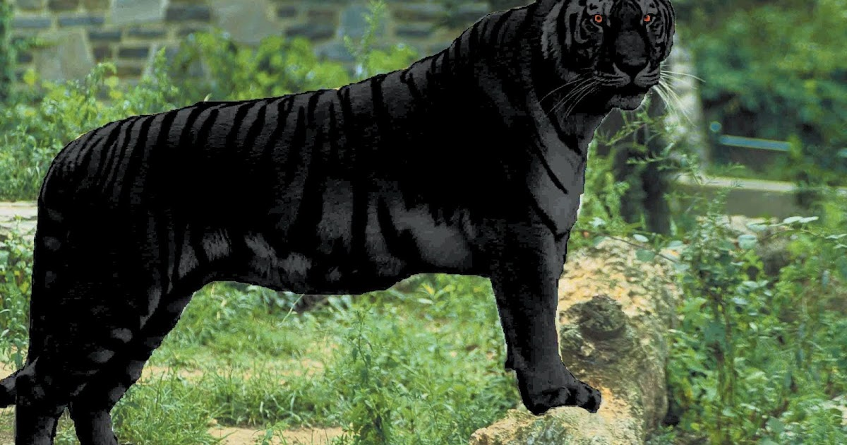 black tiger animal - photo #14