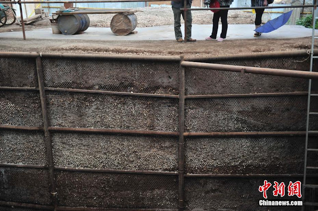 China's largest shell mound discovered in Yunnan