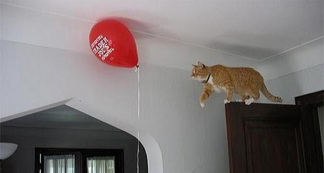 La divertida lógica de un gato