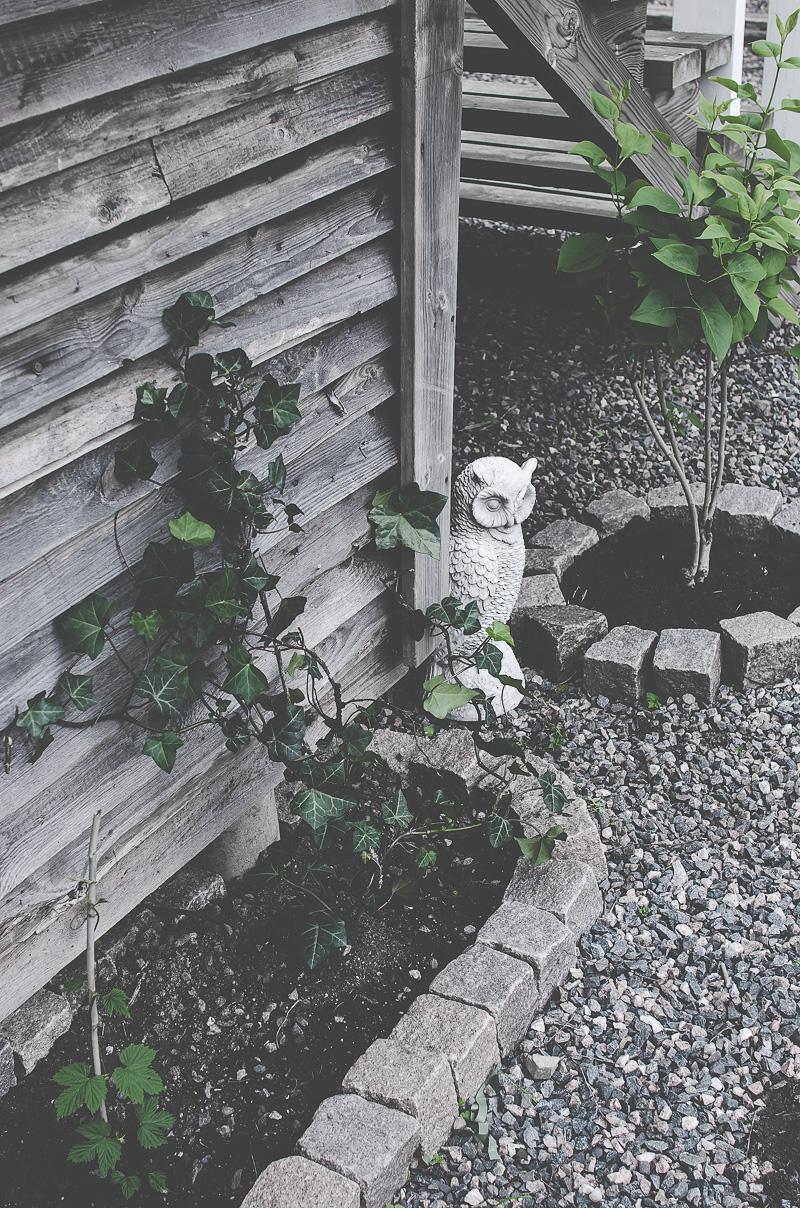 murgröna, trädgård, kullersten