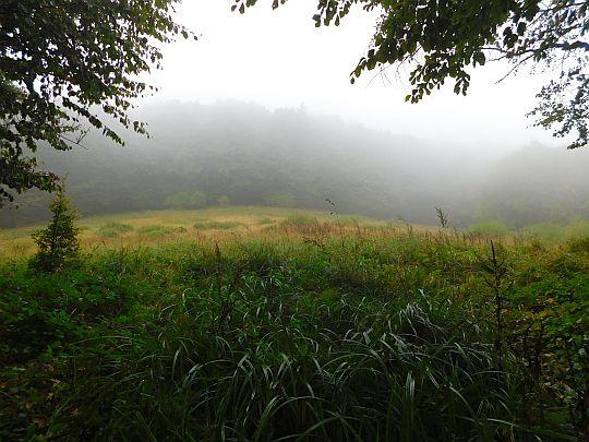 Śródleśna polana na przełęczy oddzielającej Lysý vrch od grzbietu granicznego.