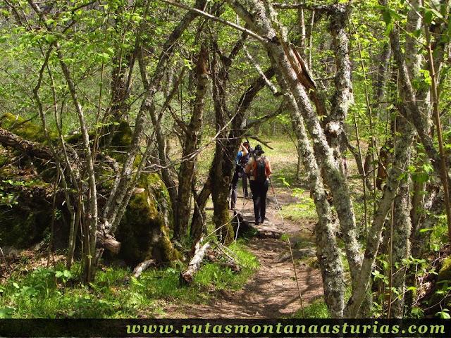 Bosque en el valle de las truchas
