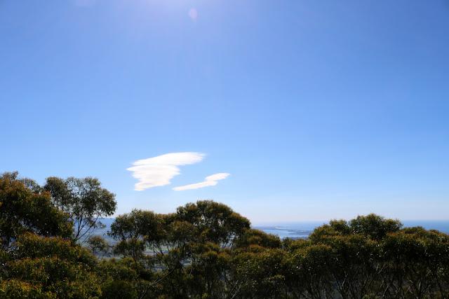Alphabet Dating Letter O Outdoor Adventure - Illawarra Fly Treetop Walk Review