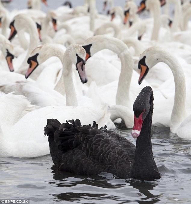The Black Swan at Oldstead