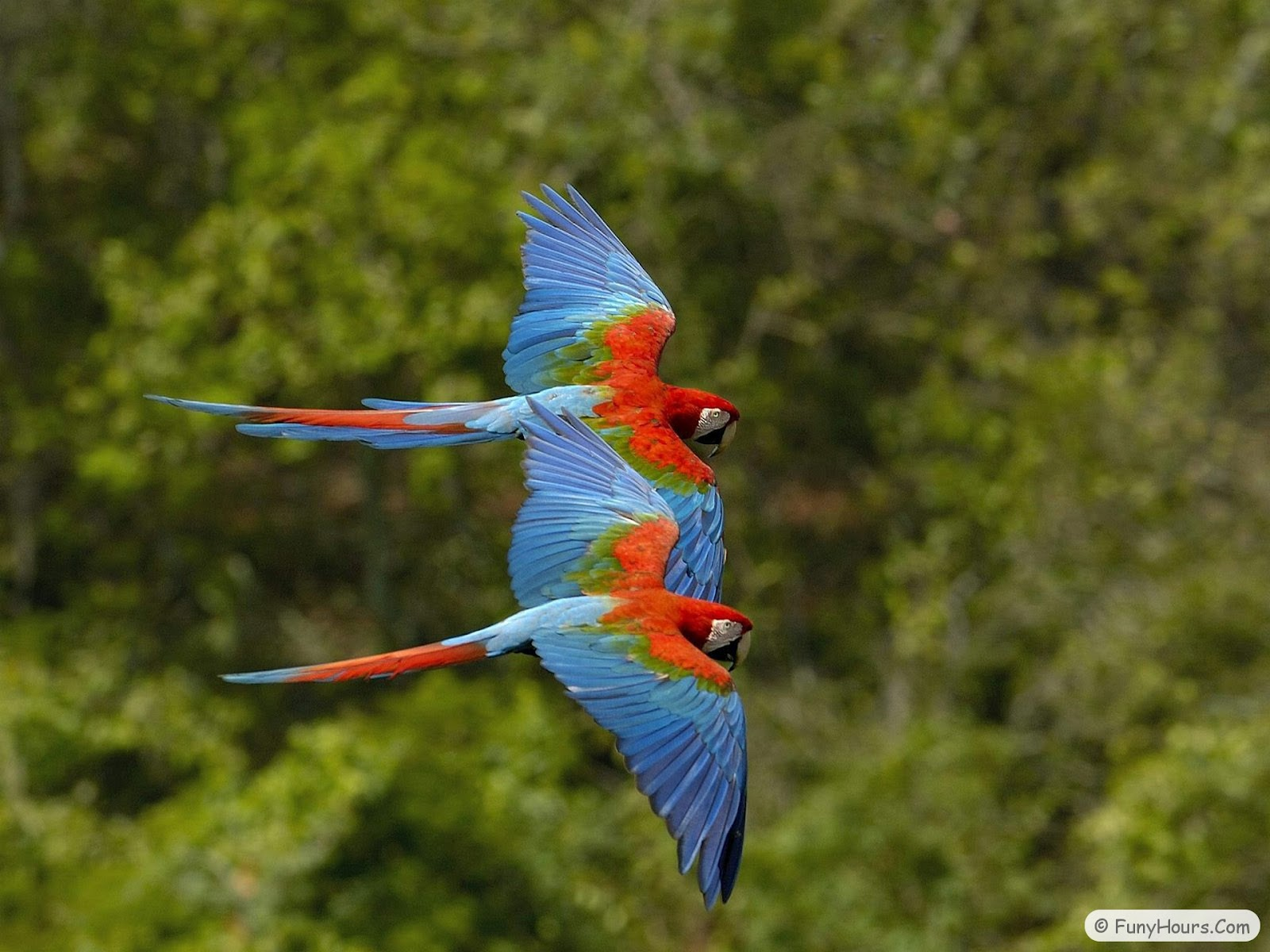More Exotic-Birds Wallpaper