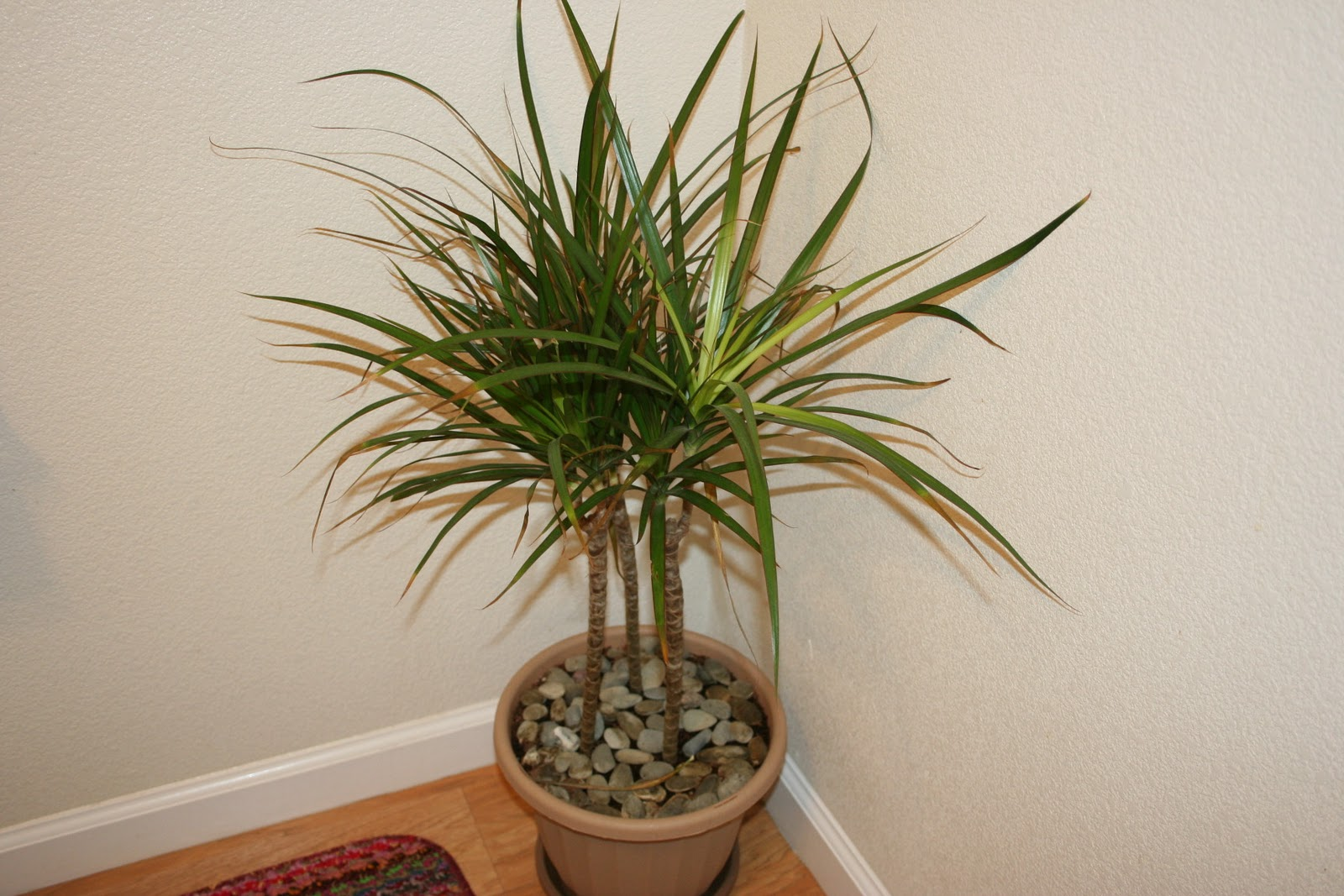 Life As It Comes: Decorating With House Plants