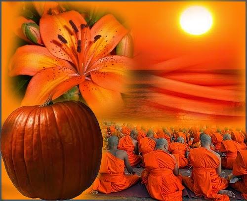 Risultato immagini per foto natura colore arancio