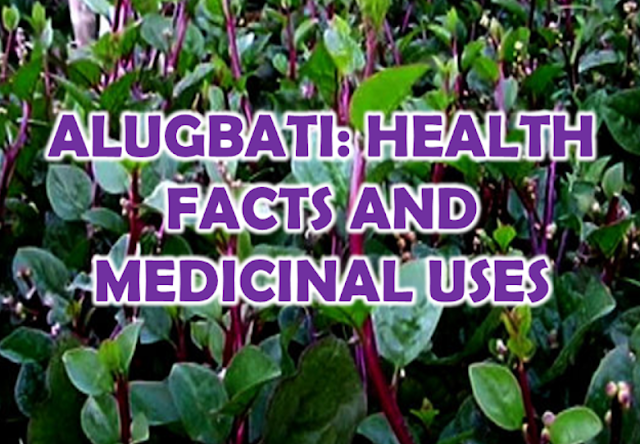 ALUGBATI is a vine commonly grow in most of the areas in the Philippines. Characterized by its vivid purple color heart-shaped leaves and sticky resin, alugbati is used in some dishes in some provinces. Aside from being a local vegetable, it is also among the list of medicinal plants and herbs that can cure many health issues and helps in our nutrition.  Advertisement        Sponsored Links  Alugbati plant contains saponin, vitamin A and B. It also has glycosides, saponins, tannins, flavonoids, terpenoids, and carbohydrates.  Small fruits of the alugbati plant contain mucilage and iron Some studies also show that the alugbati plant has carotene, vitamin C, and nitrate.  The different parts of the alugbati plant have different methods on how to extract the juice or resin to be used as a medicine.  Roots: The juice coming from the roots of alugbati obtained from pounding or grinding , or boiling you can also boil it.  Leaves:  To get the juice from the leaves,it is often boiled or pressed to obtain the thick resin.  Vines: The thick resin or juice coming from the vine can be obtained by pounding and pressing it.  HERE ARE THE DISEASES THAT CAN BE CURED USING ALUGBATI:  1. Ringworm: Applying the thick resin or juice from the leaves or vines can heal the ringworm on the skin.  2. Diarrhea and dysentery: Drinking the thick juice from alugbati plant is said to cure diarrhea and dysentery.  3. Hypertension: a person suffering from hypertension can be cured by drinking the tea from boiling alugbati leaves.  4. Wounds and cuts: the juice extracted from alugbati leaves mixed with oil or minced leaves applied directly on affected part of the skin can help it to heal fast.  5. Acne and pimples: applying alugbati resin on pimples and acne can help ease the swelling.  6. Ulcer: a tea made from boiling alugbati leaves can easily cure stomach ulcer.  7. Stomach ache: boil some alugbati vines and roots and drink the tea to cure stomach ache.  8. Headache: the thick and sticky resin is applied on the head to alleviate headache.    READ MORE:  Find Out Which Country Has The Fastest Internet Speed Using This Interactive Map    Find Out Which Is The Best Broadband Connection In The Philippines   Best Free Video Calling/Messaging Apps Of 2018    Modern Immigration Electronic Gates Now At NAIA    ASEAN Promotes People Mobility Across The Region    You Too Can Earn As Much As P131K From SSS Flexi Fund Investment    Survey: 8 Out of 10 OFWS Are Not Saving Their Money For Retirement    Can A Virgin Birth Be Possible At This Millennial Age?    Dubai OFW Lost His Dreams To A Scammer    Support And Protection Of The OFWs, Still PRRD's Priority