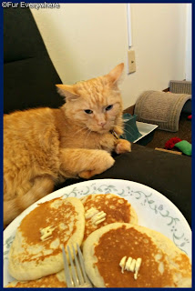 Carmine hanging out on the couch. He ponders whether the pancakes in front of him are any good.