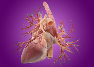 Natural Remedies For Blocked Arteries Treatment